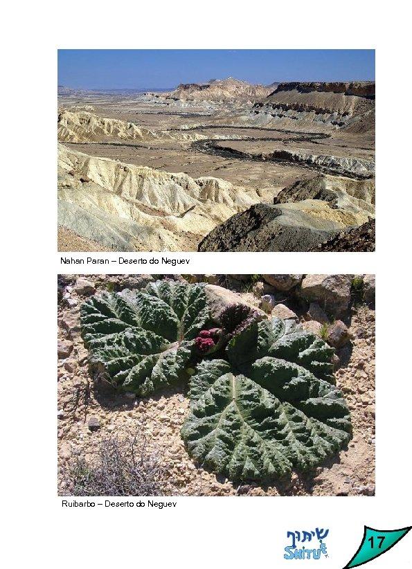 Nahan Paran – Deserto do Neguev Ruibarbo – Deserto do Neguev 17