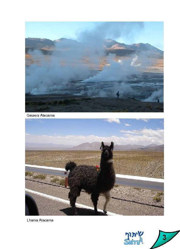 Geisers Atacama Lhama Atacama 3