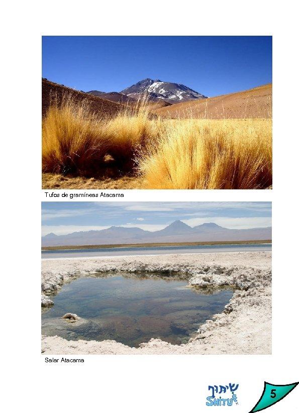 Tufos de gramíneas Atacama Salar Atacama 5