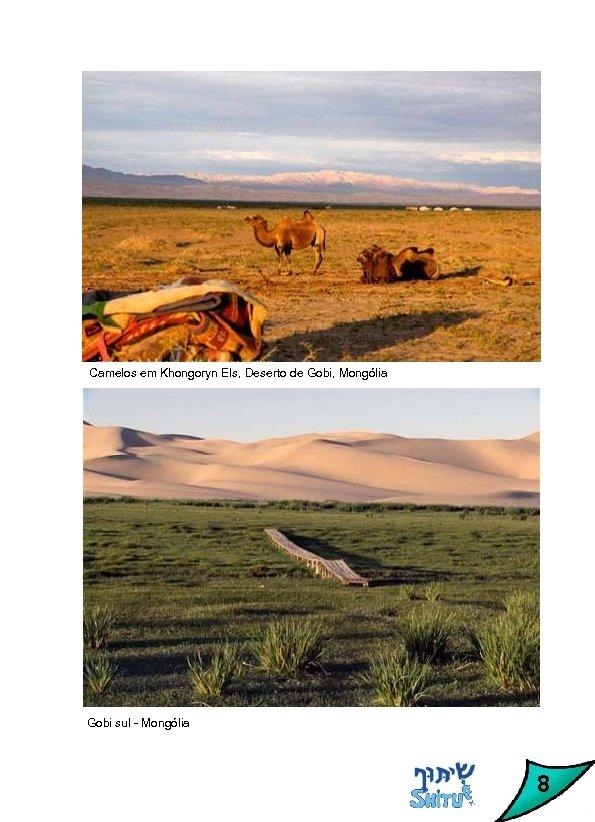 Camelos em Khongoryn Els, Deserto de Gobi, Mongólia Gobi sul - Mongólia 8