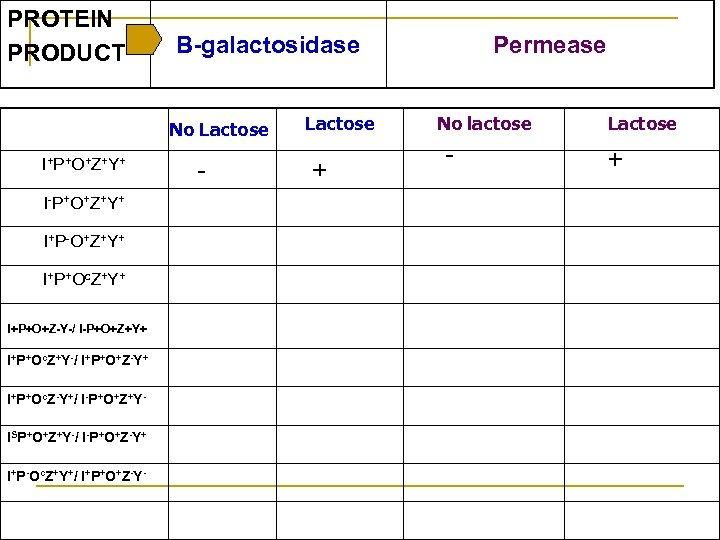 PROTEIN PRODUCT Β-galactosidase No Lactose I+P+O+Z+Y+ I-P+O+Z+Y+ I+P-O+Z+Y+ I+P+Oc. Z+Y+ I+P+O+Z-Y-/ I-P+O+Z+Y+ I+P+Oc. Z+Y-/