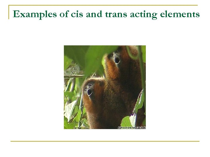 Examples of cis and trans acting elements