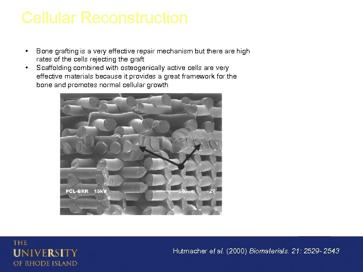 Cellular Reconstruction • • Bone grafting is a very effective repair mechanism but there