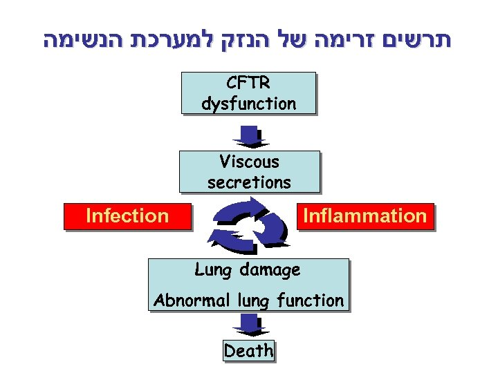 תרשים זרימה של הנזק למערכת הנשימה CFTR dysfunction Viscous secretions Infection Inflammation Lung