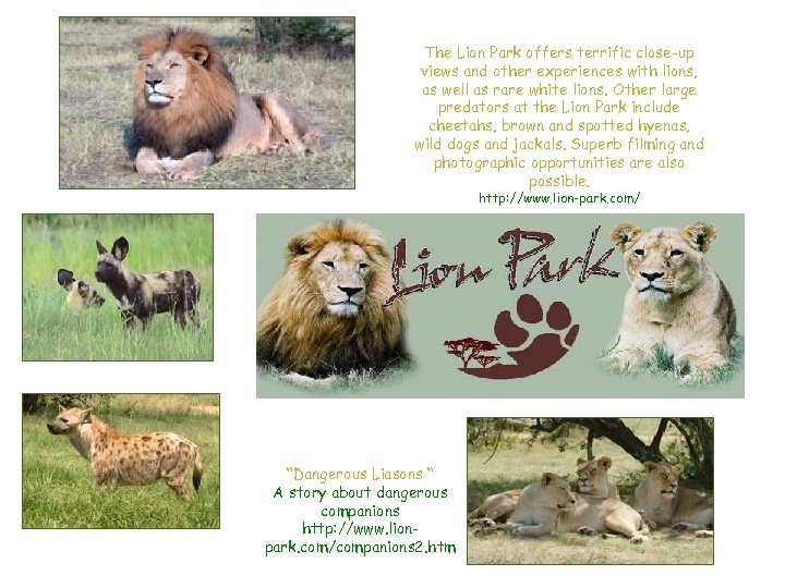 The Lion Park offers terrific close-up views and other experiences with lions, as well