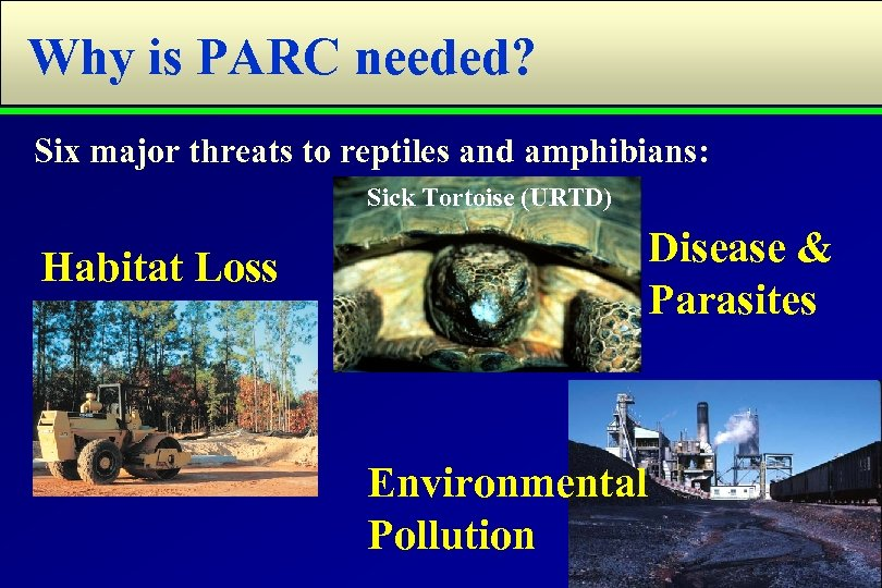 Why is PARC needed? Six major threats to reptiles and amphibians: Sick Tortoise (URTD)