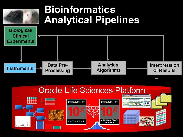 Bioinformatics Analytical Pipelines Biological/ Clinical Experiments Instruments Data Pre. Processing Analytical Algorithms Interpretation of