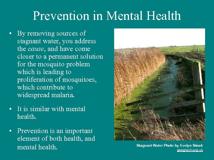 Prevention in Mental Health • By removing sources of stagnant water, you address the