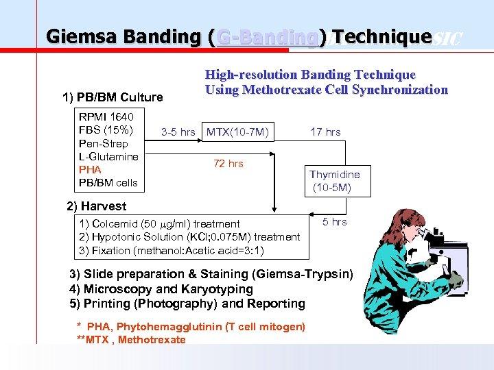 Giemsa Banding (G-Banding) Technique Back to Basic 1) PB/BM Culture RPMI 1640 FBS (15%)