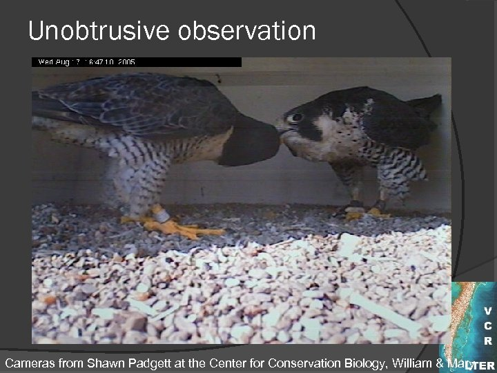 Unobtrusive observation Cameras from Shawn Padgett at the Center for Conservation Biology, William &