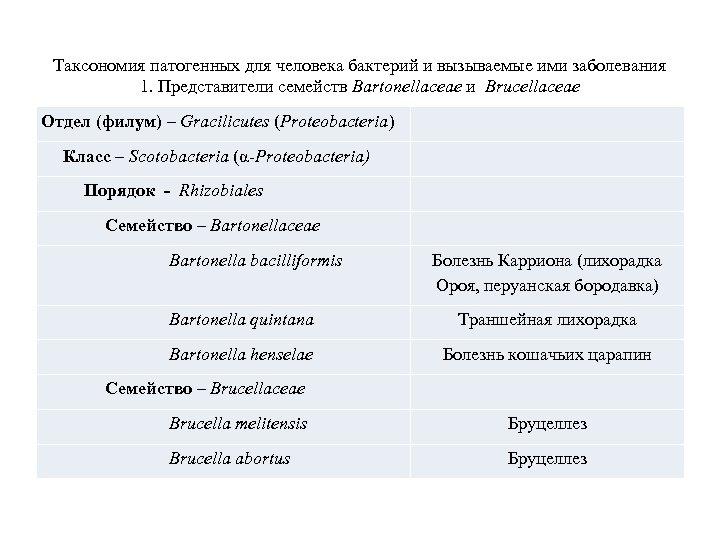 Таксономия патогенных для человека бактерий и вызываемые ими заболевания 1. Представители семейств Bartonellaceae и