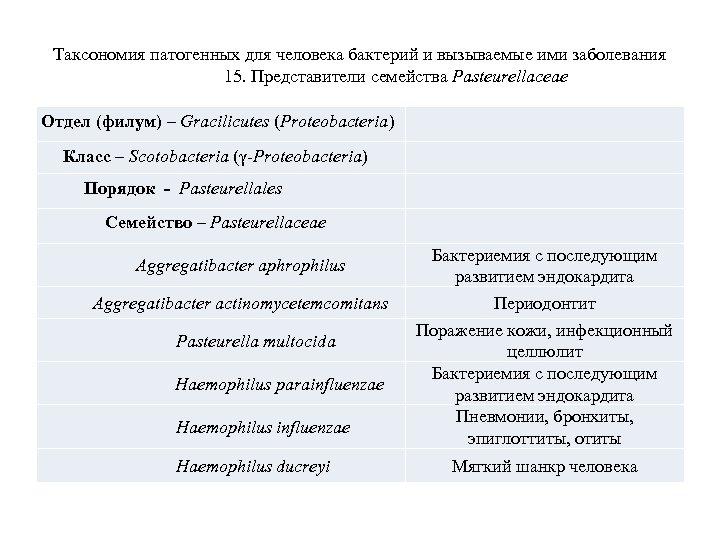 Таксономия патогенных для человека бактерий и вызываемые ими заболевания 15. Представители семейства Pasteurellaceae Отдел