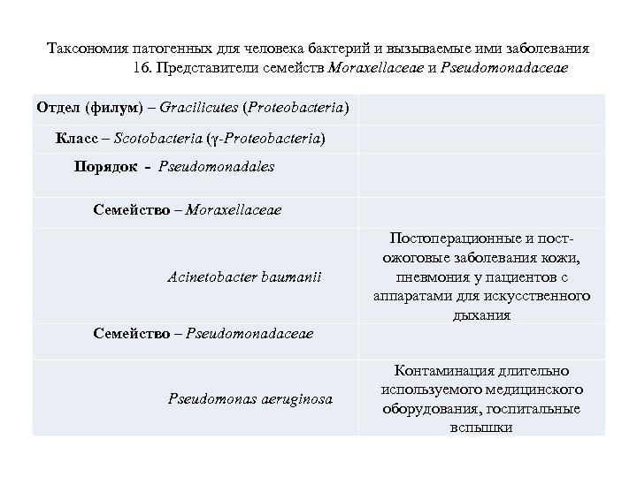 Таксономия патогенных для человека бактерий и вызываемые ими заболевания 16. Представители семейств Moraxellaceae и
