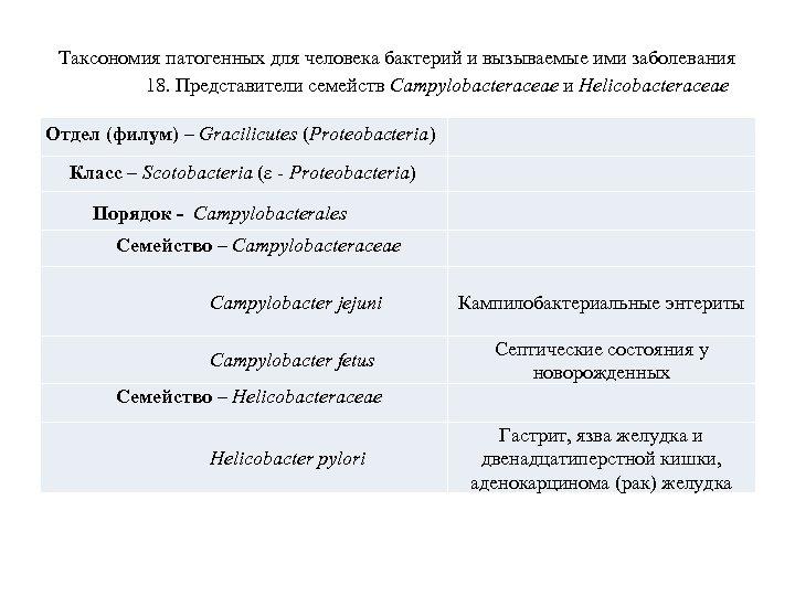 Таксономия патогенных для человека бактерий и вызываемые ими заболевания 18. Представители семейств Campylobacteraceae и