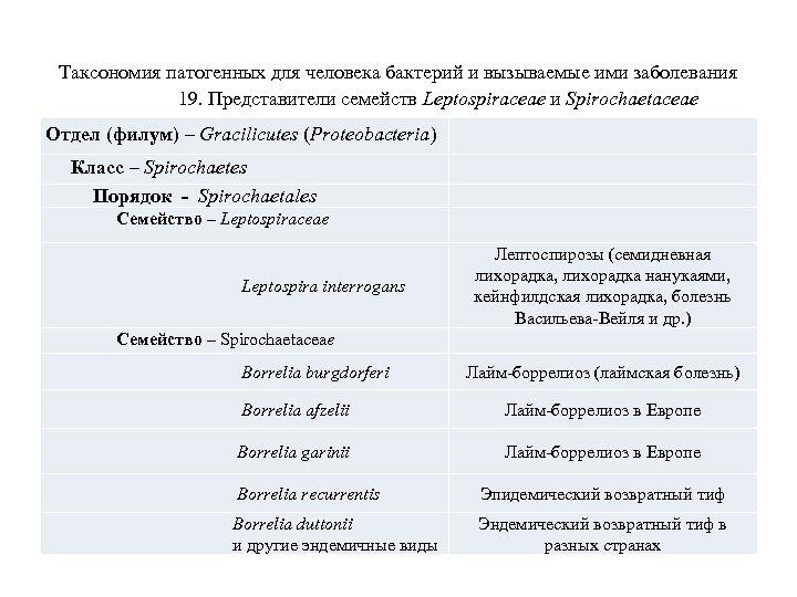Таксономия патогенных для человека бактерий и вызываемые ими заболевания 19. Представители семейств Leptospiraceae и
