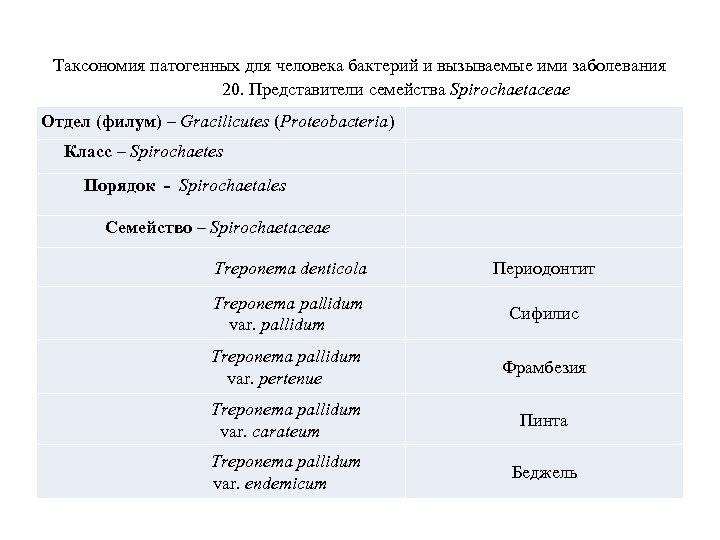 Таксономия патогенных для человека бактерий и вызываемые ими заболевания 20. Представители семейства Spirochaetaceae Отдел