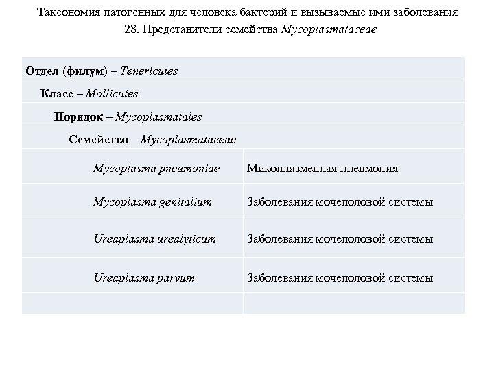 Таксономия патогенных для человека бактерий и вызываемые ими заболевания 28. Представители семейства Mycoplasmataceae Отдел