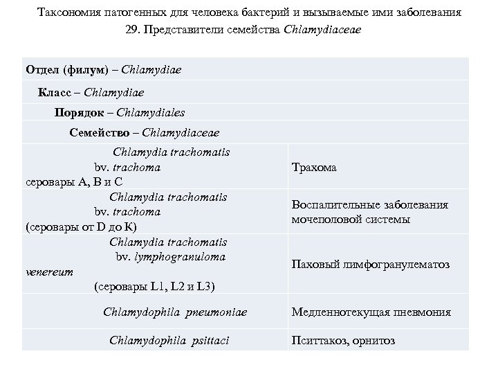 Таксономия патогенных для человека бактерий и вызываемые ими заболевания 29. Представители семейства Chlamydiaceae Отдел