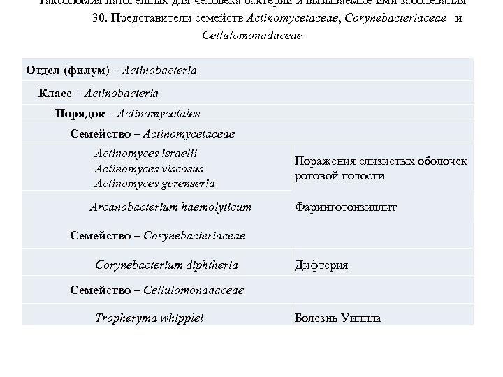 Таксономия патогенных для человека бактерий и вызываемые ими заболевания 30. Представители семейств Actinomycetaceae, Corynebacteriaceae