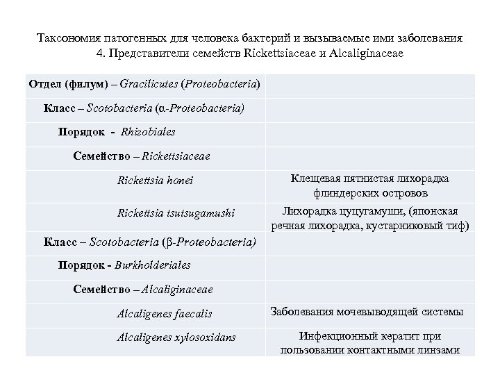 Таксономия патогенных для человека бактерий и вызываемые ими заболевания 4. Представители семейств Rickettsiaceae и