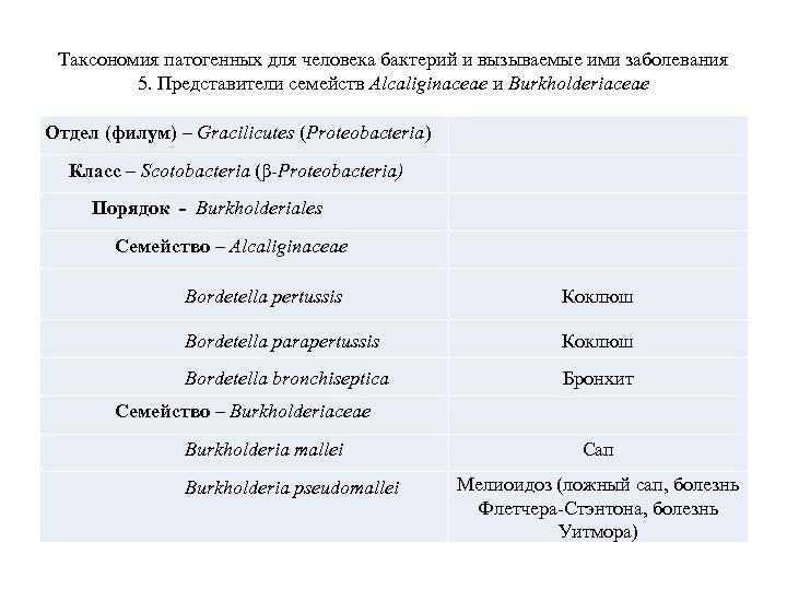 Таксономия патогенных для человека бактерий и вызываемые ими заболевания 5. Представители семейств Alcaliginaceae и