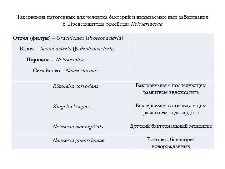 Таксономия патогенных для человека бактерий и вызываемые ими заболевания 6. Представители семейства Neisseriaceae Отдел
