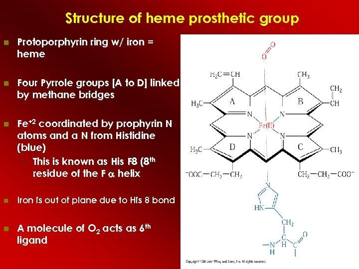 Structure of heme prosthetic group Protoporphyrin ring w/ iron = heme Four Pyrrole groups