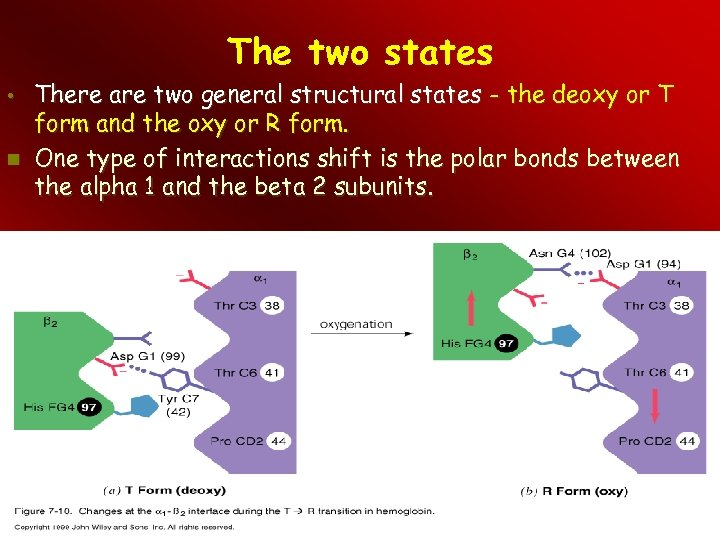 The two states • There are two general structural states - the deoxy or