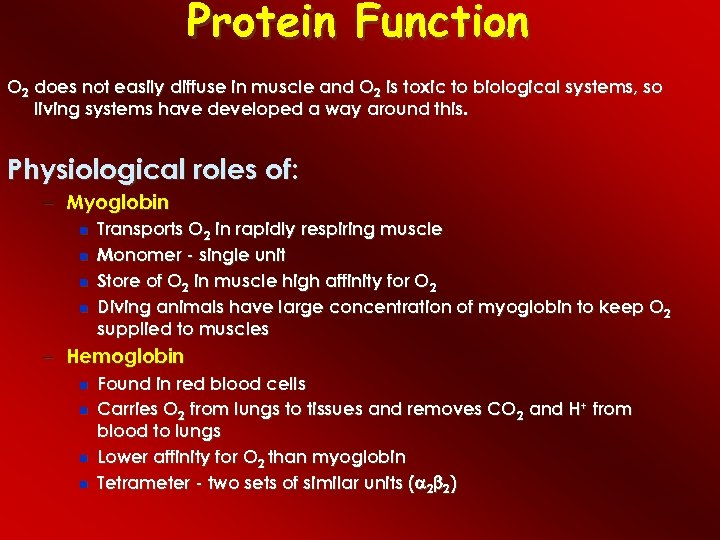 Protein Function O 2 does not easily diffuse in muscle and O 2 is
