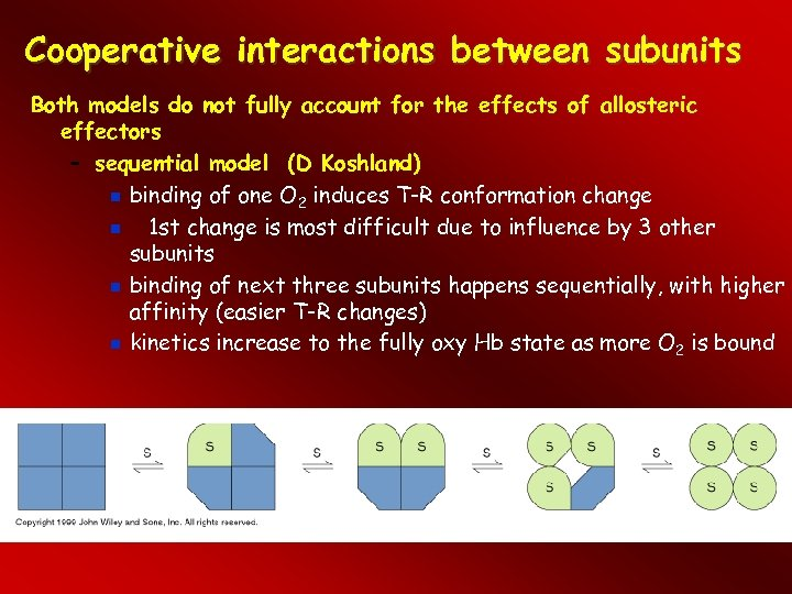 Cooperative interactions between subunits Both models do not fully account for the effects of