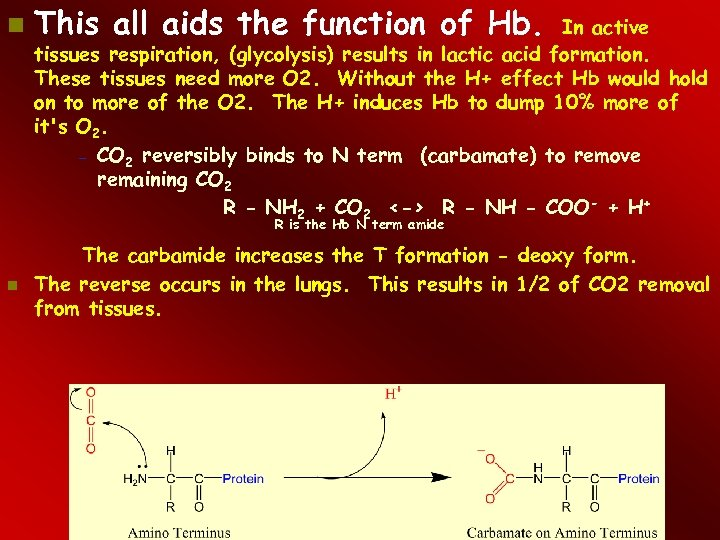 This all aids the function of Hb. In active tissues respiration, (glycolysis) results