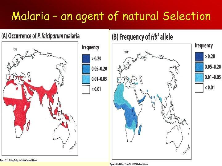 Malaria – an agent of natural Selection