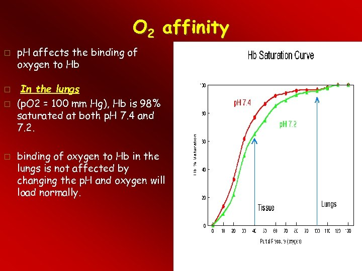 O 2 affinity p. H affects the binding of oxygen to Hb In the