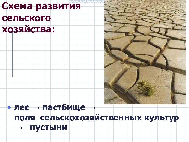 Схема развития сельского хозяйства: • лес → пастбище → поля сельскохозяйственных культур → пустыни
