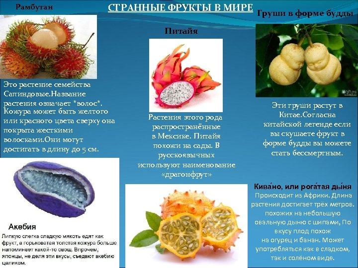 Рамбутан СТРАННЫЕ ФРУКТЫ В МИРЕ Груши в форме будды Питайя Это растение семейства Сапиндовые.