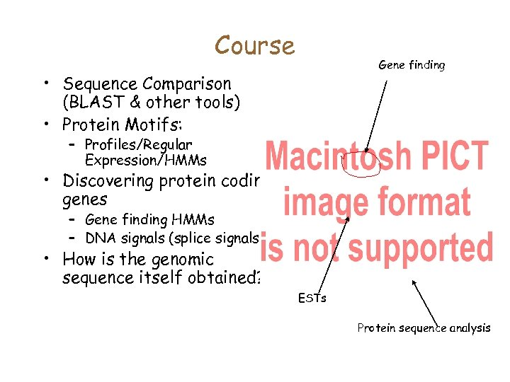 Course Gene finding • Sequence Comparison (BLAST & other tools) • Protein Motifs: –