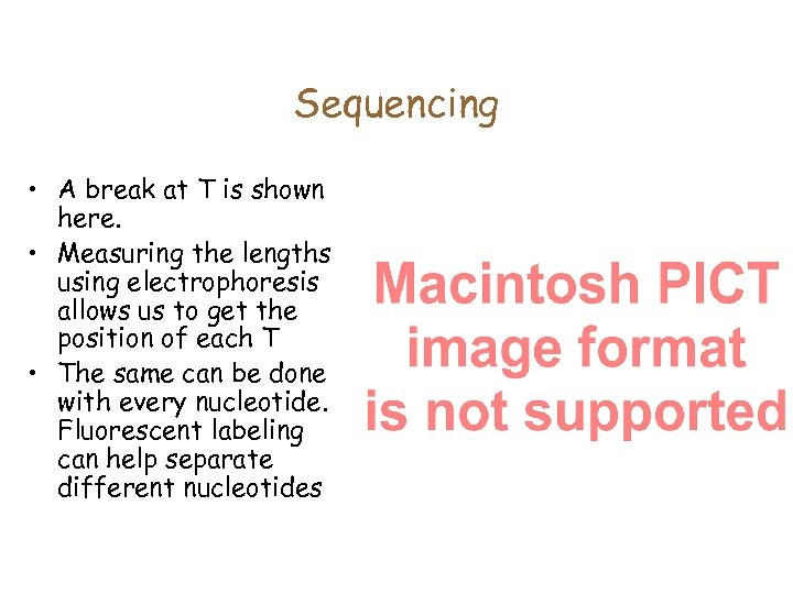 Sequencing • A break at T is shown here. • Measuring the lengths using