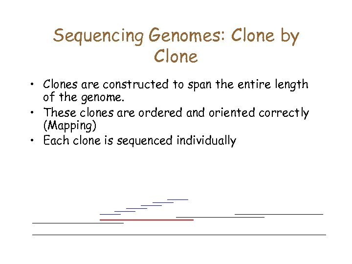 Sequencing Genomes: Clone by Clone • Clones are constructed to span the entire length