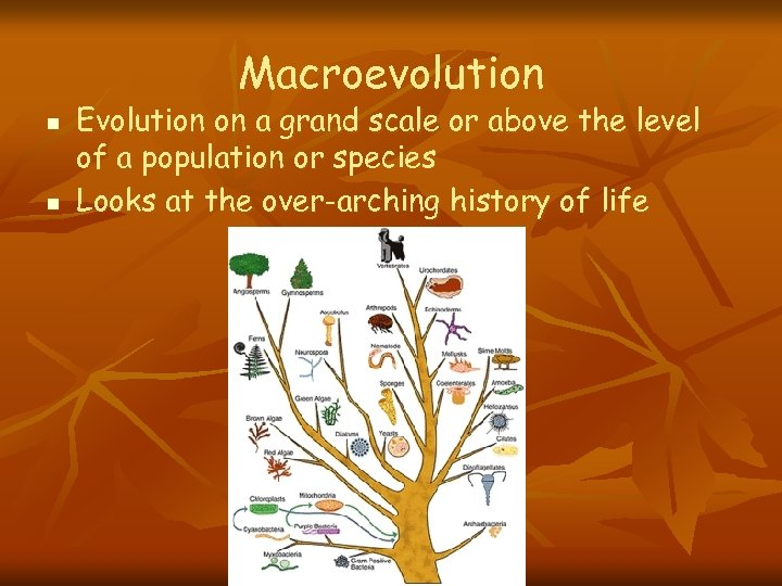 Macroevolution n n Evolution on a grand scale or above the level of a