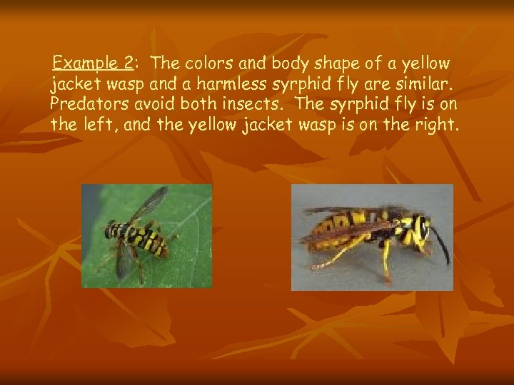 Example 2: The colors and body shape of a yellow jacket wasp and a