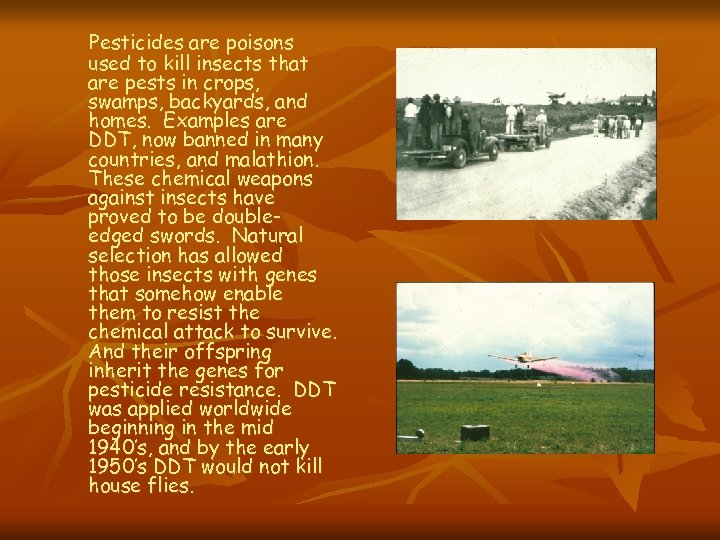 Pesticides are poisons used to kill insects that are pests in crops, swamps, backyards,