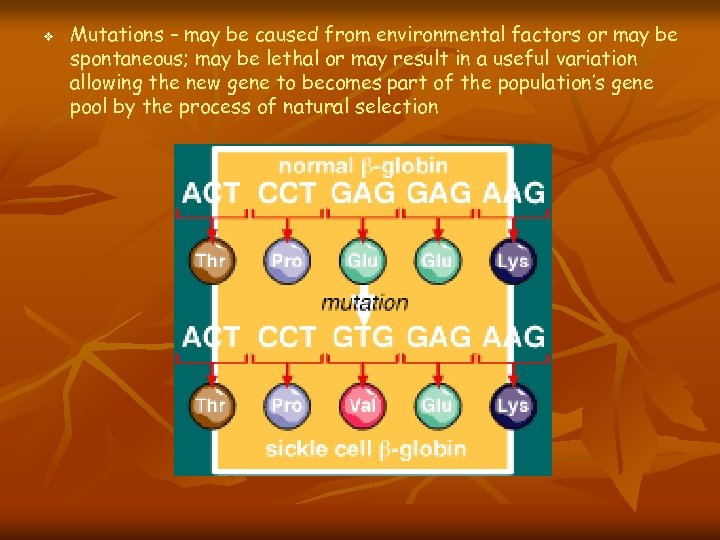 v Mutations – may be caused from environmental factors or may be spontaneous; may