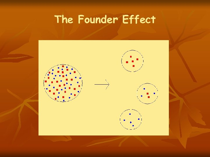 The Founder Effect