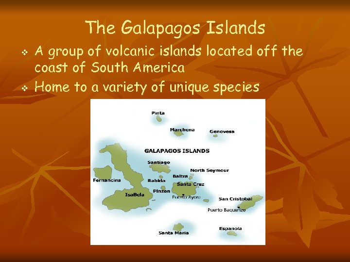 The Galapagos Islands v v A group of volcanic islands located off the coast