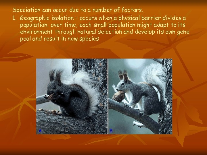 Speciation can occur due to a number of factors. 1. Geographic isolation – occurs