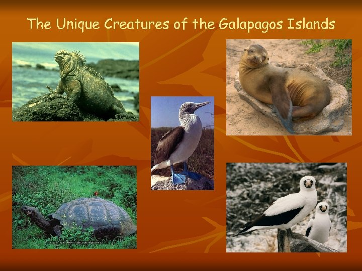 The Unique Creatures of the Galapagos Islands