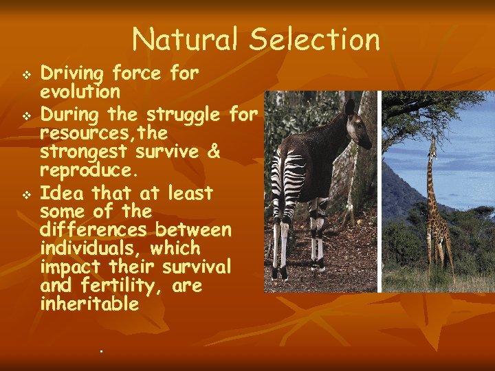 Natural Selection v v v Driving force for evolution During the struggle for resources,