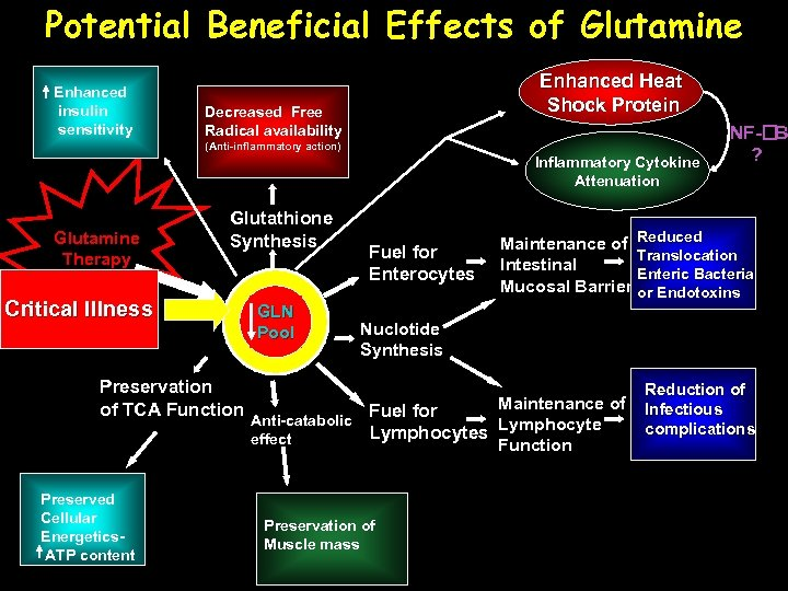 Potential Beneficial Effects of Glutamine Enhanced insulin sensitivity Enhanced Heat Shock Protein Decreased Free