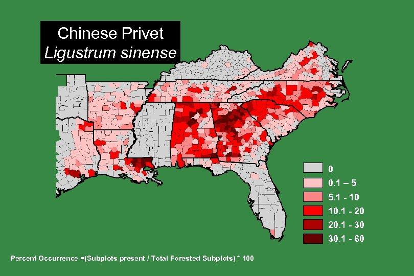 Chinese Privet Ligustrum sinense 0 0. 1 – 5 5. 1 - 10 10.