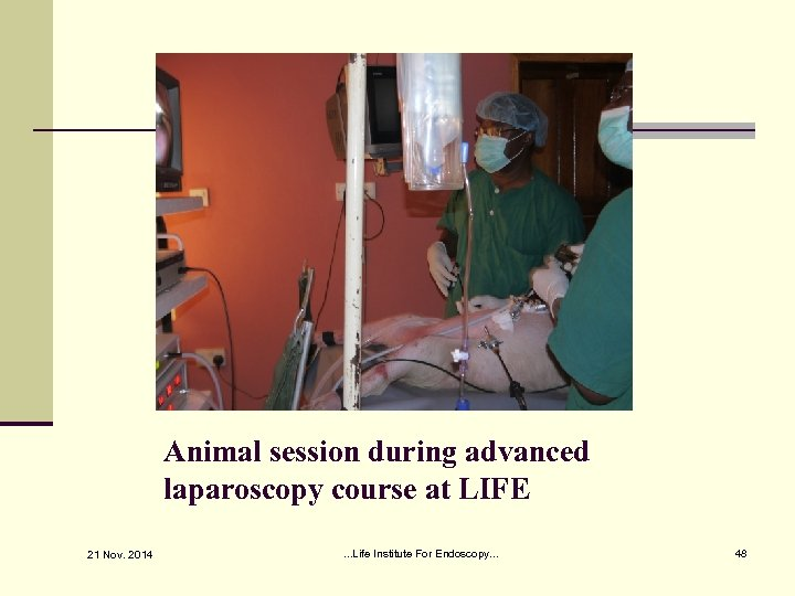 Animal session during advanced laparoscopy course at LIFE 21 Nov. 2014 . . .